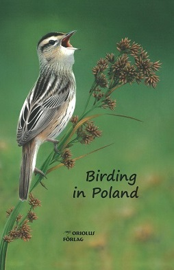 Birding in Poland Aquatic Warbler